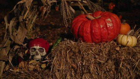 Halloween_1 Superstitious Minds